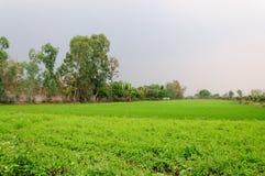 Fältträd och himmel för regnet Arkivbilder