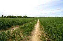 Fältväg i de gröna veteskördarna Arkivfoto