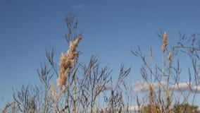 Fältväxter i fältet stock video