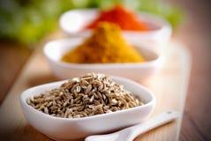 Fänkål kärnar ur och annan kryddor Arkivbilder