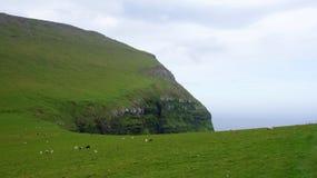 Färöer, Schafe auf dem Berg Lizenzfreie Stockfotos