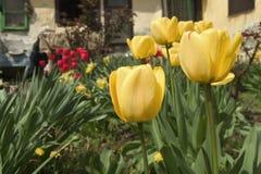 Färben Sie Blumen gelb Stockfotos