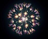 Färben Sie Glasblume lokalisiert auf Schwarzem, der Bell-Agapanthus Lizenzfreies Stockbild