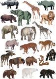 Färben Sie große Ansammlung der Tiere Stockbilder