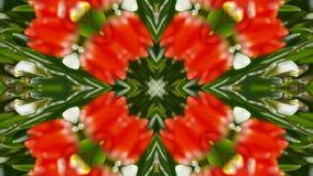 Färben Sie Lotosblumenmuster-Hochzeitshintergrund, herrliche Orient-Religionsphantasie, Fractal, Struktur lizenzfreie abbildung