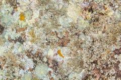 Färben Sie Muster der Baumrinde mit Kratzern, Flecken, Schmutz und Abstrichen Stockfoto