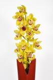 Färben Sie Orchidee gelb stockbilder