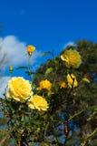 Färben Sie Rosafarbenes gelb Lizenzfreie Stockfotos