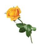 Färben Sie Rosafarbenes gelb stock abbildung