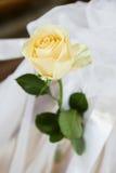 Färben Sie Rosafarbenes gelb Stockbild
