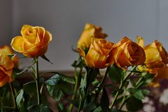 Färben Sie Rosafarbenes gelb Knospe, Blumenblätter, Blumenstrauß Stockfotografie