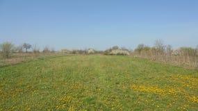 Färben Sie sich auf grüner Wiese, unter dem blauen Himmel gelb Lizenzfreie Stockbilder