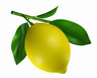 Färben Sie Zitrone gelb Stockbild