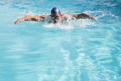Färdig simmare som gör fjärilsslaglängden i simbassängen Arkivbild