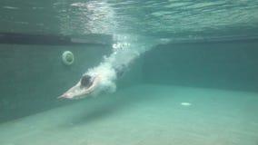Färdigt dyka för man som är undervattens- i simbassäng i ultrarapid arkivfilmer