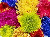 färg Royaltyfria Foton