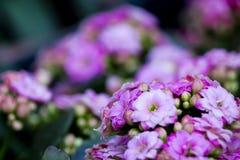 Färg av blomman Arkivbild