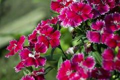Färg av blomman Arkivfoto