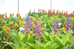 Färg av blomman Arkivfoton