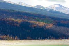 Färg av den naturBanff nationalparken Kanada Arkivbilder