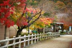Färg av trädet för japansk lönn Royaltyfria Foton