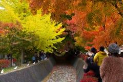 Färg av trädet - Kawakuchigo Royaltyfri Fotografi