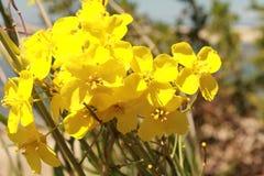 Färg av våren Royaltyfria Foton