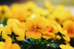 Färg av våren Arkivfoton