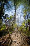 färg fallen tree Fotografering för Bildbyråer