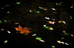 Färg lämnar att sväva i vattnet i höst Arkivbilder