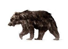Färg målade en gå djur björnsida Arkivfoton