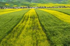 Färg och linje i jordbruksmark Arkivfoton