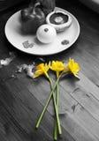 Färg som poppar påskliljor mot grönsaker royaltyfria bilder
