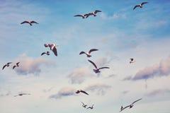 Färg tonad bild av flygseagulls Arkivbild
