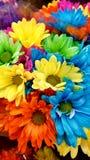 Färga blommor royaltyfri bild