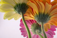 Färga blommor Arkivfoton