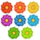 Färga blommor Arkivbild