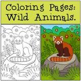 Färga sidor: Sitter den röda pandan för liten bot på stenen stock illustrationer