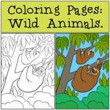 Färga sidor: Vilda djur Gullig lat sengångare vektor illustrationer
