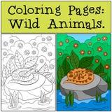 Färga sidor: Vilda djur Huggormen ligger på stenen vektor illustrationer