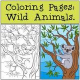 Färga sidor: Vilda djur Liten gullig koala Arkivfoto