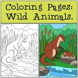 Färga sidor: Vilda djur Moderuttern ser henne behandla som ett barn vektor illustrationer