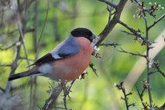 färgad fågel Royaltyfri Foto