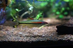 Färgad fisk Arkivfoton