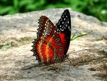 färgad fjäril Fotografering för Bildbyråer