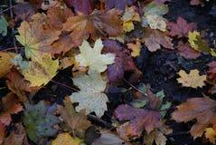 färgad höst Royaltyfria Foton