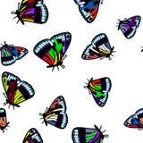 Färgad illustration eps10 för vektor för fjärilsmodell sömlös Royaltyfria Foton