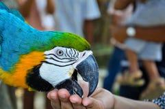 Färgad papegojamatmatning arkivbilder