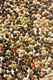 färgad peppar Arkivbild