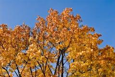 färgad tree Royaltyfri Foto